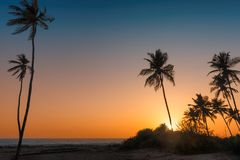 Palm trees at sunset on paradise tropical beach. In Goa, India Royalty Free Stock Images