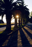 Palm trees at sunset in a Park. In Abkhazia Royalty Free Stock Photography