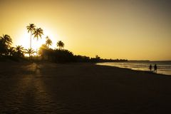Palm trees on a sunset. A picture of palm trees on a sunset in Puerto Rico royalty free stock photo