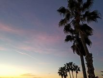 Palm trees at sunset relaxation Royalty Free Stock Photography