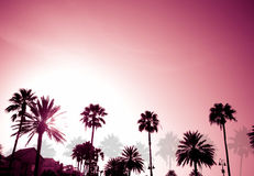 Palm Trees Sunset Retro. Tropical coconut palm tree silhouettes on a purple sunset Stock Photo