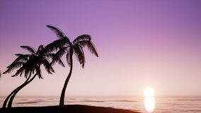Palm trees and sunset. Sea stock footage