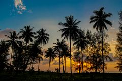 Free Palm Trees Sunset Silhouette At Tropical Resort Royalty Free Stock Photo - 115444705