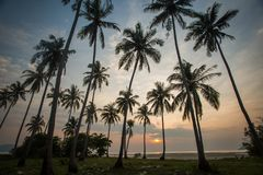 Palm trees at sunset. Silhouette of palm trees at sunset in Thailand Stock Photo