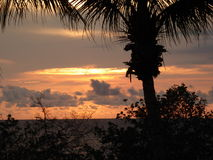 Palm trees and sunset. A silhouette of a palm tree with a purple and orange coloured cloudy sunset background over the sea Royalty Free Stock Photos