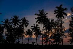 Palm trees sunset silhouette at tropical beach resort. Palm trees sunset silhouette at tropical sea resort. beautiful luxury sea beach resort in Tropics Royalty Free Stock Photography