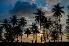 Palm trees sunset silhouette at tropical resort. Palm trees sunset silhouette at tropical sea resort. beautiful luxury sea beach resort in Tropics, Thailand Stock Photos