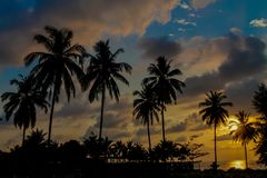 Palm trees sunset silhouette at tropical resort. Palm trees sunset silhouette at tropical sea resort. beautiful luxury sea beach resort in Tropics, Thailand Stock Photo