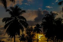 Palm trees sunset silhouette at tropical resort. Palm trees sunset silhouette at tropical sea resort. beautiful luxury sea beach resort in Tropics, Thailand Stock Photography