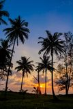 Palm trees sunset silhouette at tropical beach resort. Palm trees sunset silhouette at tropical sea resort. beautiful luxury sea beach resort in Tropics Royalty Free Stock Photo