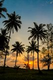 Palm trees sunset silhouette at tropics. Palm trees sunset silhouette at tropical sea resort. beautiful luxury sea beach resort in Tropics, Thailand Royalty Free Stock Photo