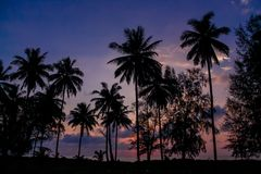 Palm trees sunset silhouette at tropics. Palm trees sunset silhouette at tropical sea resort. beautiful luxury sea beach resort in Tropics, Thailand Stock Photo