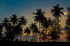 Palm trees sunset silhouette at tropics. Palm trees sunset silhouette at tropical sea resort. beautiful luxury sea beach resort in Tropics, Thailand Stock Images