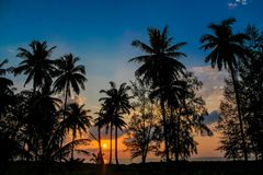 Palm trees sunset silhouettes on the beach. Palm trees sunset silhouette at tropical sea resort. beautiful luxury sea beach resort in Tropics, Thailand Stock Images