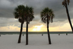 Palm Trees at Sunset. Silhoutte of palm trees on the beach at sunset stock photo
