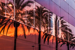 Palm trees and sunset sky reflected in the modern building Royalty Free Stock Photography