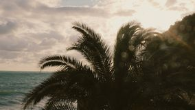 Palm trees and sunset. Slowmotion 50 fps stock footage