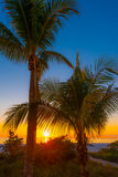 Palm Trees at Sunset. Sun peeking from behind palm trees sunset at the tropical beach Stock Photography