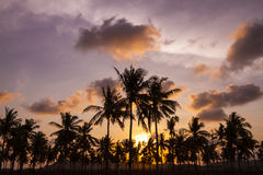 Palm trees at sunset time Stock Photos