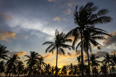 Palm trees at sunset time Royalty Free Stock Photos