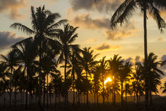 Palm trees at sunset time Royalty Free Stock Images