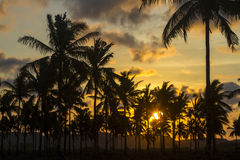 Palm trees at sunset time Stock Photography