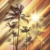 Palm trees at sunset. Royalty Free Stock Photography