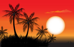 Palm trees at sunset. Tropical sunset scene with palm trees vector illustration