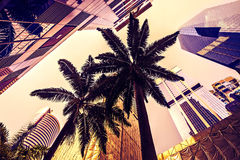 Palm Trees Surrounded By Skyscrapers Royalty Free Stock Images