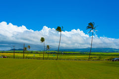 Palm Trees Sway in the Wind Along  a Highway in Maui, Hawaii Royalty Free Stock Photos