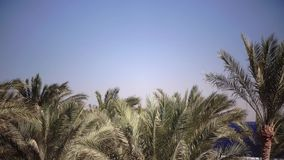 Palm trees sway from the wind on the beach. Close up. Palms swing from the wind on the beach, in the background an open blue ocean. Close up stock video footage