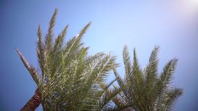 Palm trees sway from the wind on the beach. Close up. Slow motion. Palms swing from the wind on the beach, in the background an open blue ocean. Close up. Slow stock footage