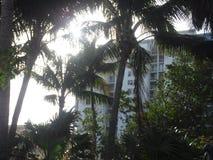 Palm trees swaying Royalty Free Stock Photo