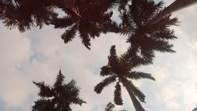 Palm trees swaying in the wind. Low angle view of palm trees swaying in the wind against blue sky and sun stock footage