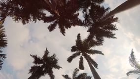 Palm trees swaying in the wind. Low angle view of palm trees swaying in the wind against blue sky and sun stock video footage