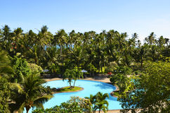 Original paradise is between us. Beutiful view on palm trees and swimming pool in vietnam Stock Photos
