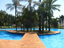 Palm trees and swimming pool Stock Photography