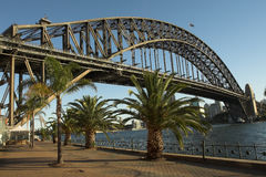 Palm Trees at Sydney Harbour. Australia Royalty Free Stock Image