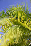Palm trees in Tahiti Stock Images