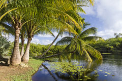 Free Palm Trees Taking A Dip Stock Photos - 38144353