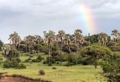 Palm trees in Tanzania Royalty Free Stock Photos
