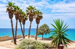 Palm trees on Tarragona sea promenade, Spain royalty free stock image