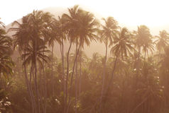Palm trees in Tayrona Royalty Free Stock Photo