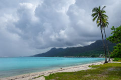 Palm trees on Temae Beach in Moorea island Stock Photography