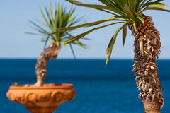 Palm trees in terra cotta pots with the ocean in the background in Italy, Europe Royalty Free Stock Photos