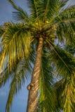 Palm Tree in Thailand Koh Phangan stock photography