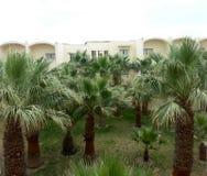 Palm trees in Tunisia Royalty Free Stock Photo