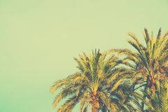 Palm Trees on Toned Light Turquoise Sky Background. 60s Vintage Style Copy Space for Text. Tropical Foliage. Seaside Ocean Beach. Palm Trees on Toned Light Royalty Free Stock Images