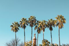 Palm trees and a top of tower in Andalusia royalty free stock photos