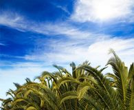 Palm trees tops, cloudy blue sky background. Tropical plants at exotic destinations. Stock Photography